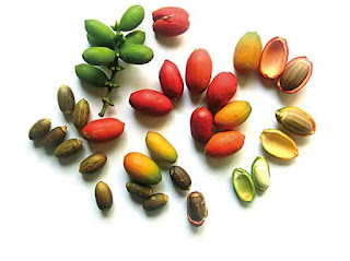 Ciri-ciri tumbuhan biji terbuka dan tertutup beserta contohnya.