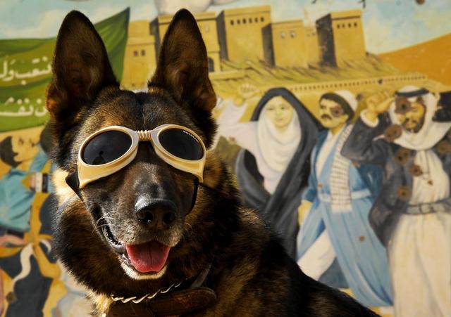 dog wearing goggles, doggles