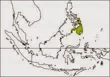 Mindanao bleeding heart Gallicolumba crinigera