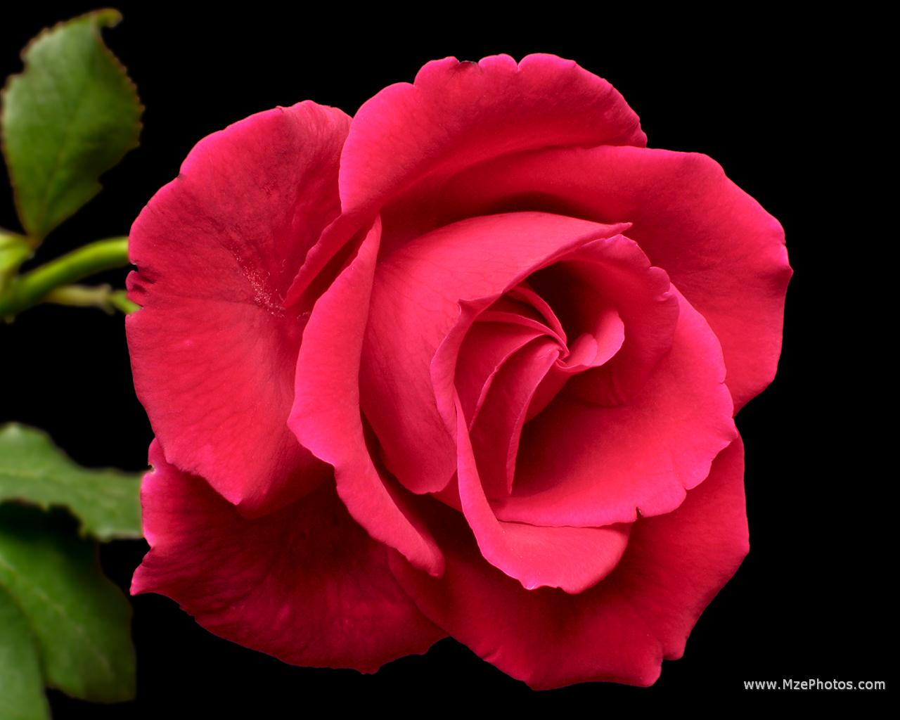 Flower wallpapers flower pictures red rose flowers Beautiful flowers photos