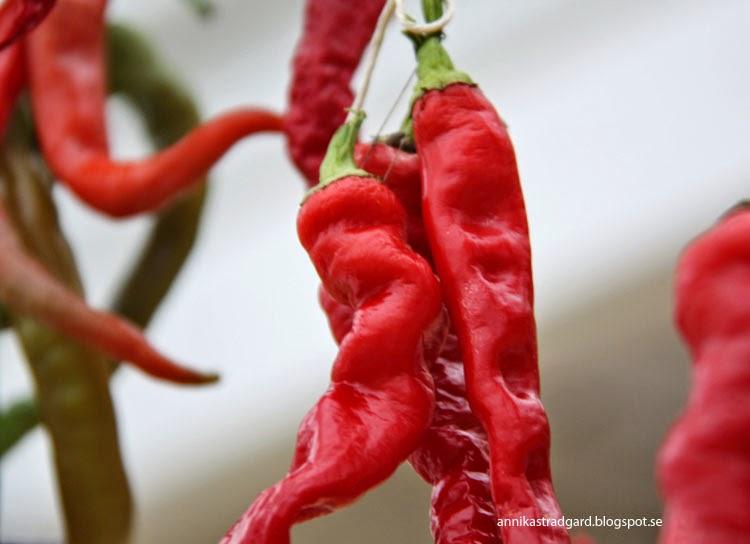vad kan man göra med chili