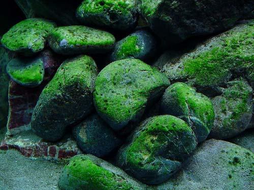 Tropical Aquarium Fish Aquarium Fish Algae Problems