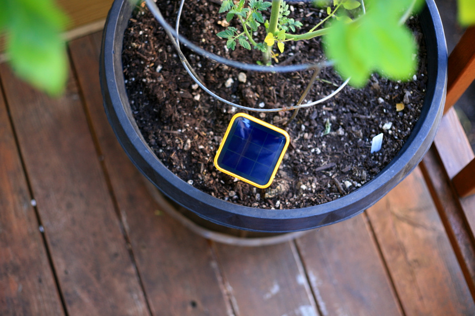 It s available on the Edyn website and at HomeDepot com and select Home  Depot stores. Beginning gardening  plus tech  The Edyn garden sensor   Create