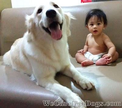 exposing baby to dog early