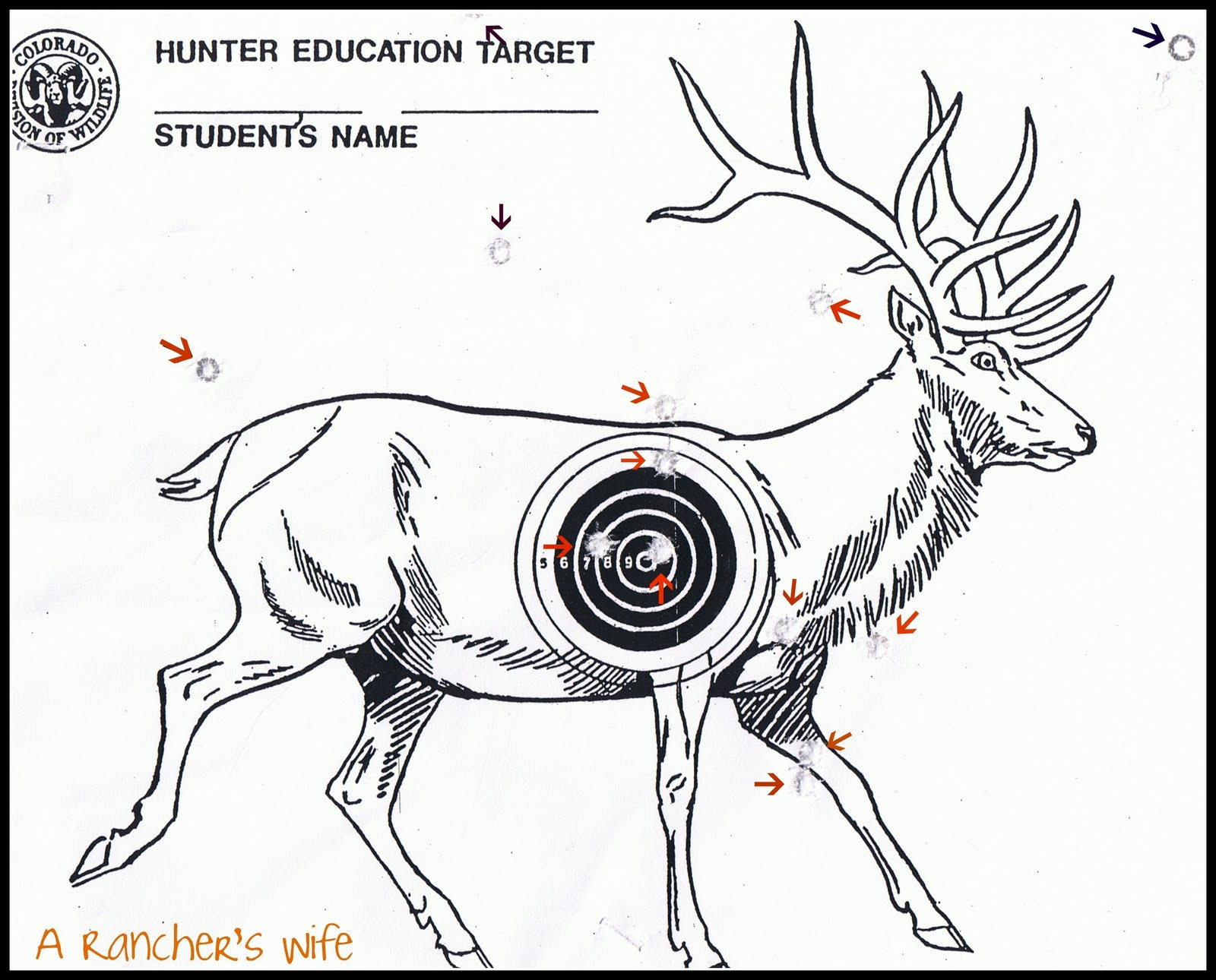 It is a picture of Clever Printable Animal Targets
