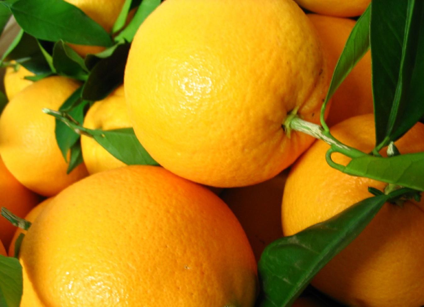 La cuchara curiosa naranjas del rbol a tu mesa - Naranjas del arbol a la mesa ...