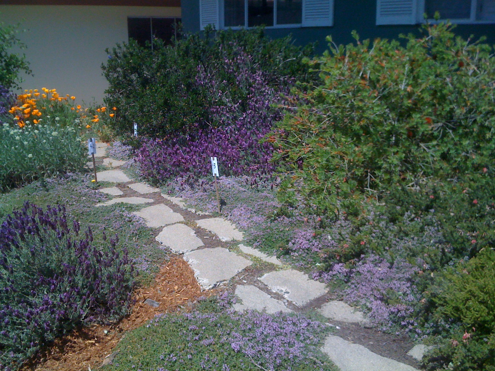 Geno's Garden Design & Coaching | : Sacramento Valley Native Plant ...