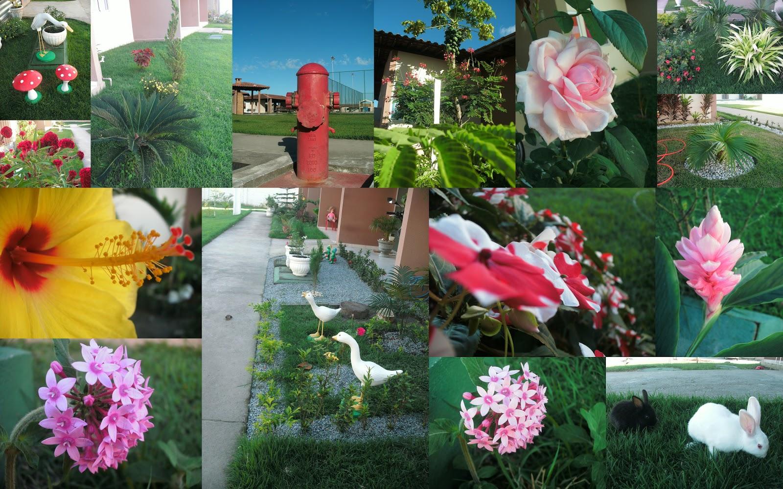 plantas jardim tropical: Jardim Tropical: O BLOG DO CONDOMÍNIO JARDIM TROPICAL ESTA NO AR