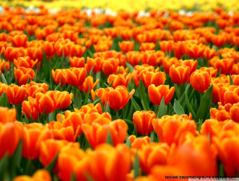 Spring Flowers Desktop Wallpaper Best Wallpaper Background