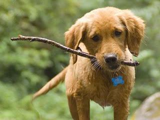 Foto Anak Anjing Imut Banget