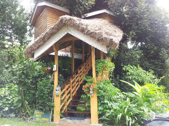 10 Hotel Ini Dibangun Di Atas Pohon Serta Rawa-Rawa
