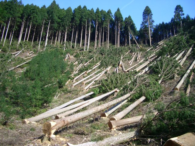 General Knowledge Why Do We Cut Trees