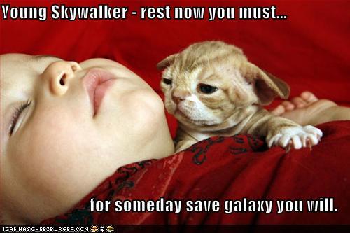 funny-pictures-yoda-cat-baby-sleeps.jpg