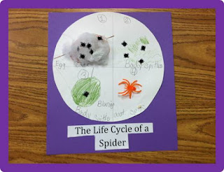 Primary Science: Spider Life Cycle, The Schroeder Page