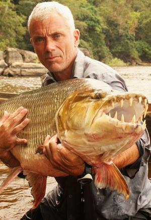Ikan Piranha sebesar manusia