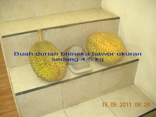 sumber http://3.bp.blogspot.com/-PMhqjsUEKdw/Tc_kr5VXg4I/AAAAAAAAAA0/5u72RBszSpA/s1600/DSCN0958.jpg