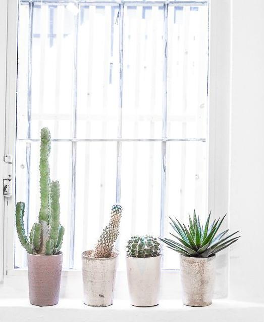 Mucho m s que dos decorar con cactus - Cactus cuidados interior ...