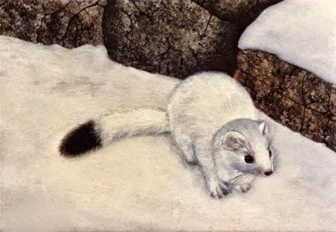 Δύο χαριτωμένα ζωάκια τις ερμινεσ και