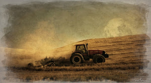 Palouse Harvest Moon