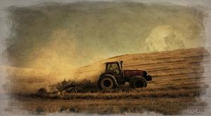 Palouse Harvest Moon