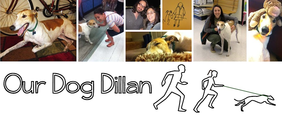 Our Dog Dillan