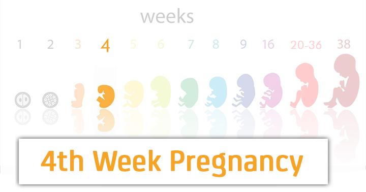 graviditetstecken vecka 3