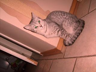 (51) Wakacje i może kilka zdjęć kotek