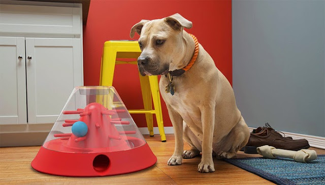 High-Tech Gadgets For Your Dog (15) 8