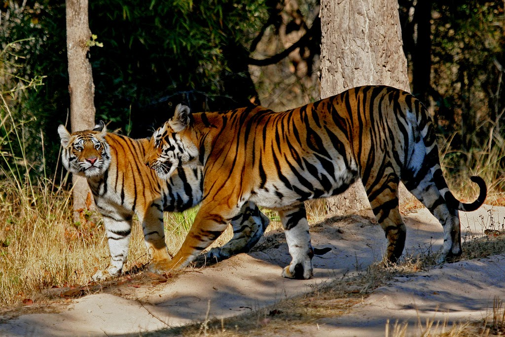 Erco Travels India Top 10 National Parks Of India For
