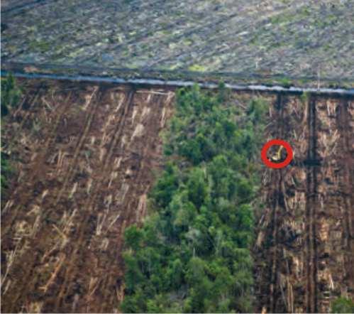Hutan hujan tropis sumatera