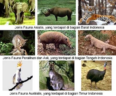 Penyebaran Keanekaragaman Fauna di Indonesia