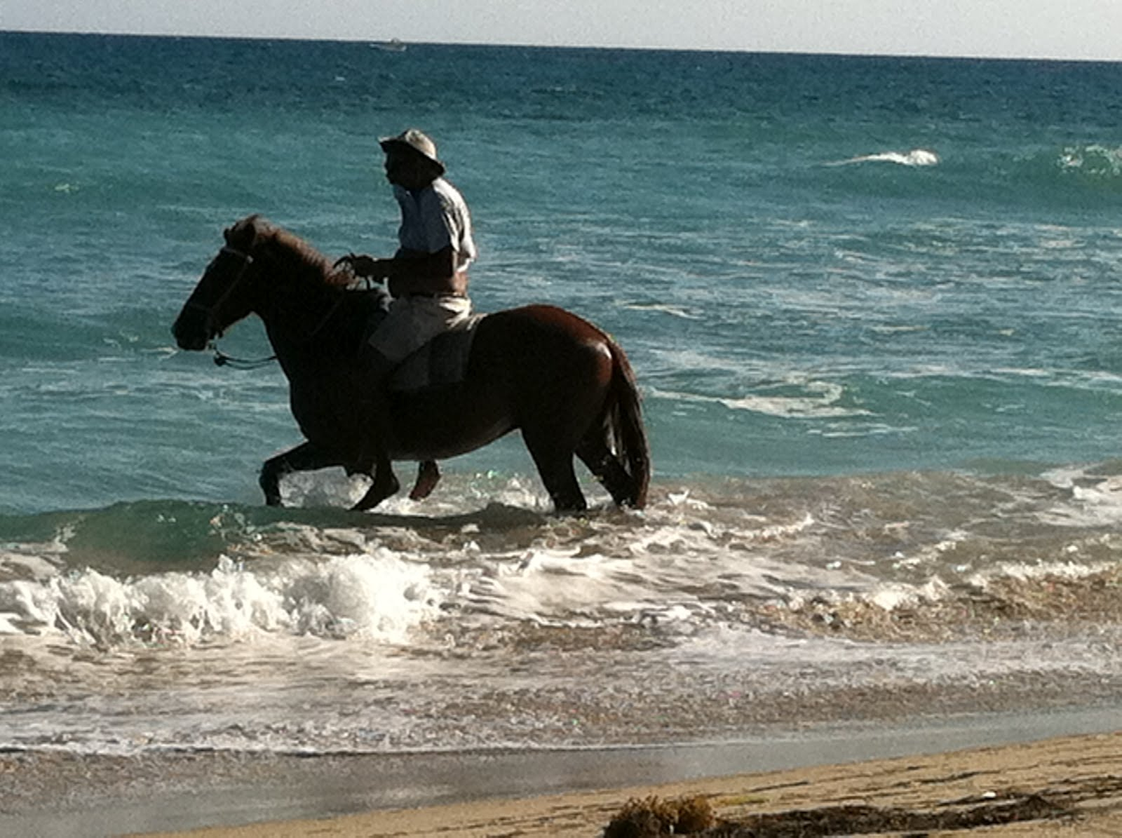 the gallery for gt wild horses galloping on the beach