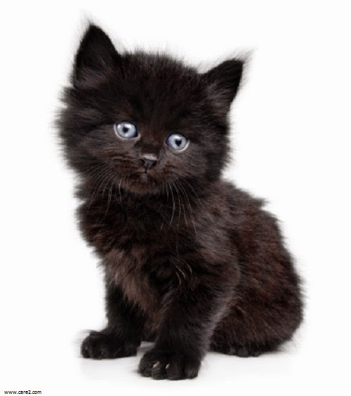 Gut bekannt Photo chaton noir - Photo de chat WZ01