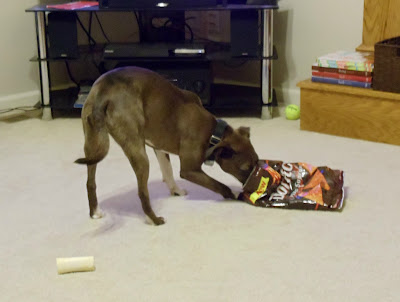 Daisy Eating Doritos