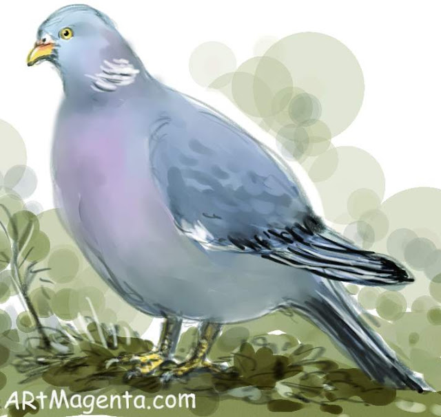 Wood Pigeon sketch painting. Bird drawing by artist and illustrator Artmagenta