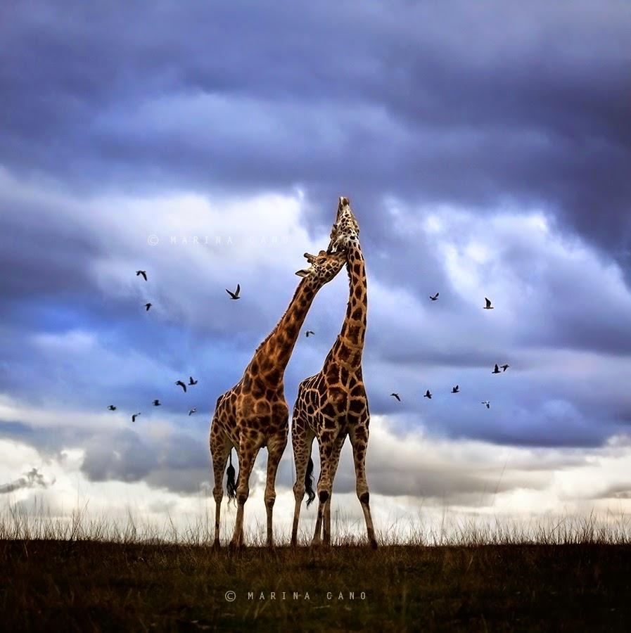 Обнимашки у животных (18 фото)