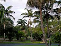 palms, Arecaceae, palm family