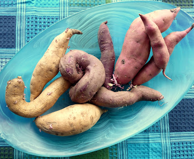 Toka Toka Gold, Purple Flesh, & Owairaka Sweet Potatoes
