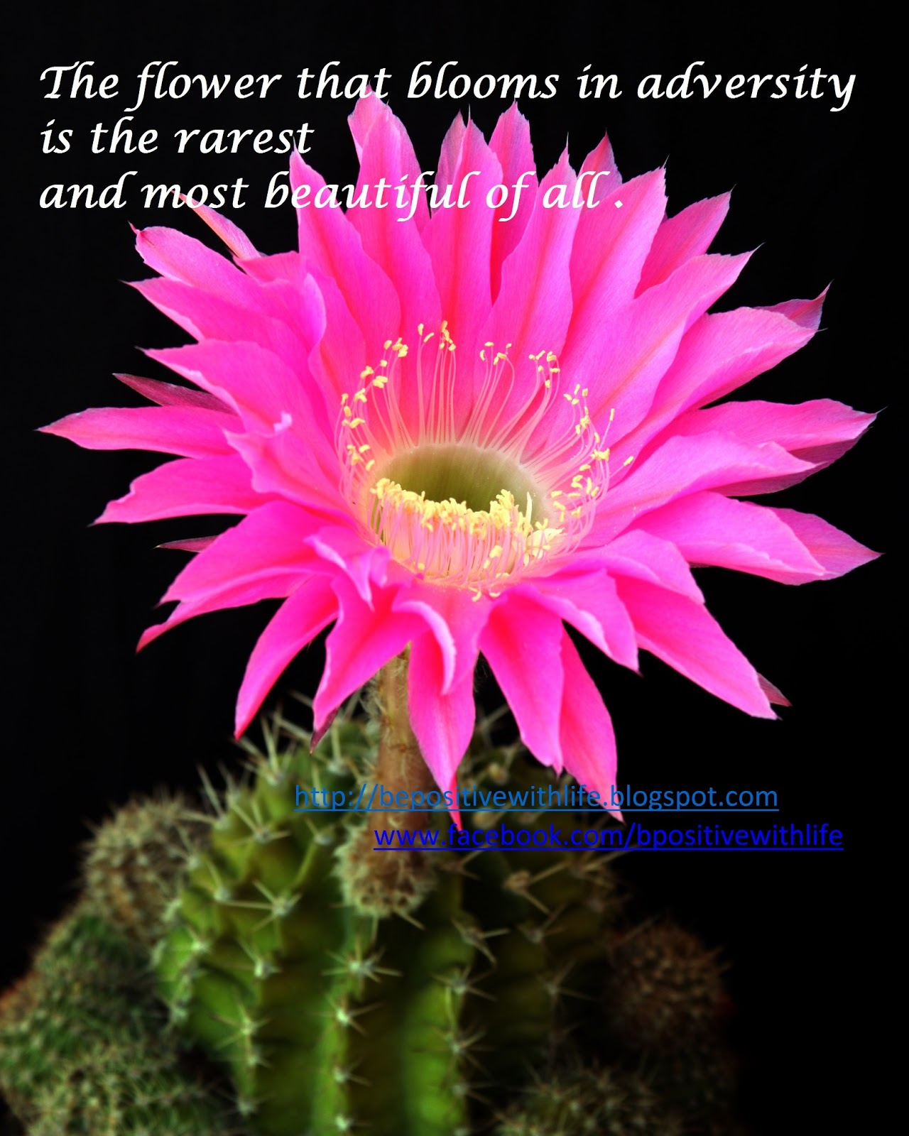 Life Quotes With Flowers QuotesGram