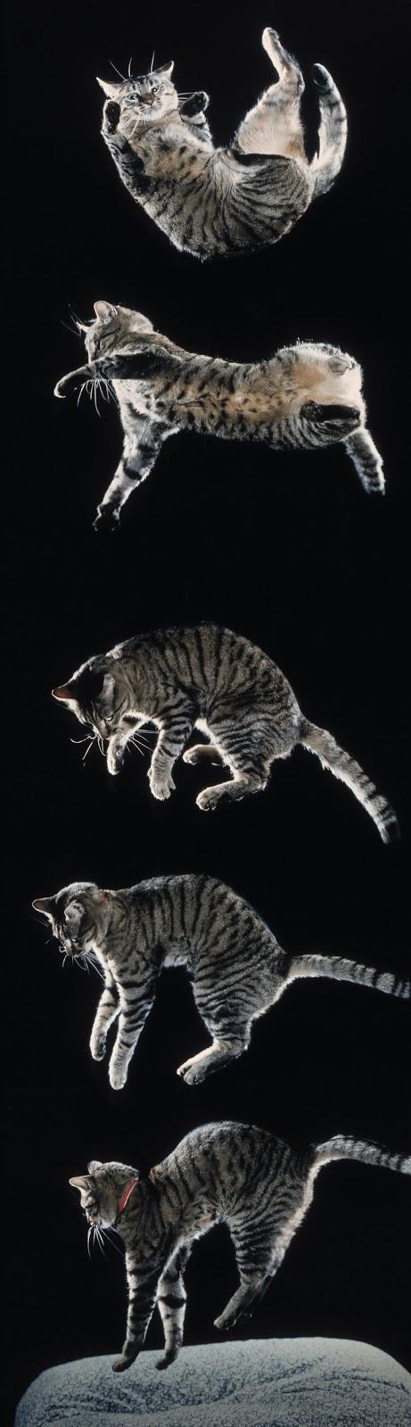 Феномен падающей кошки