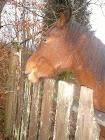 un cheval curieux!