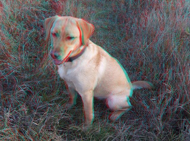 3d scanner image  3d kepek