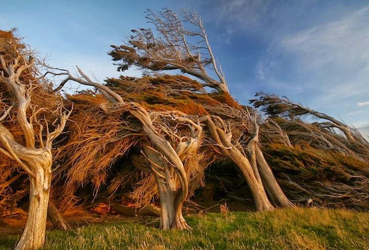 Zanimljivosti iz  geografije - Page 2 Windswept+trees+slope+point+-4