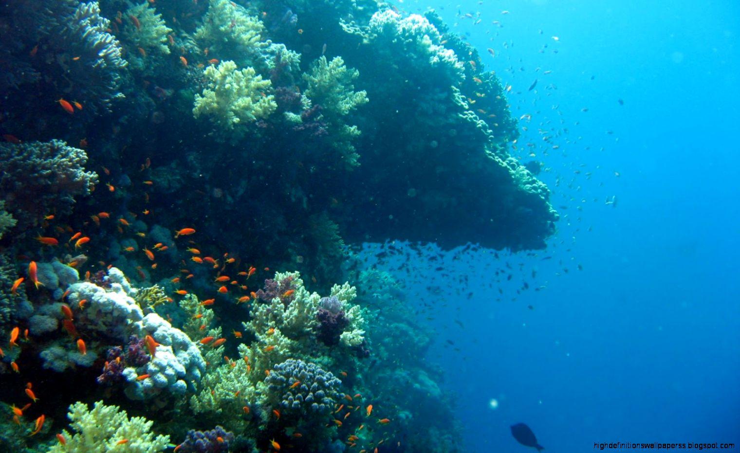 underwater desktop wallpapers hd - photo #11