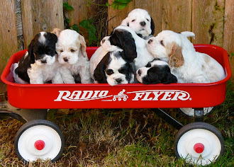 A RADIO FLYER WITH WAGON LOAD OF LIFETIME SPONSORS.......