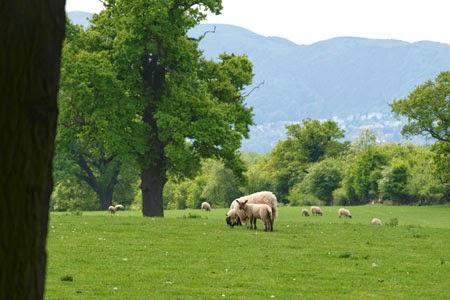 View to Malvern Hills