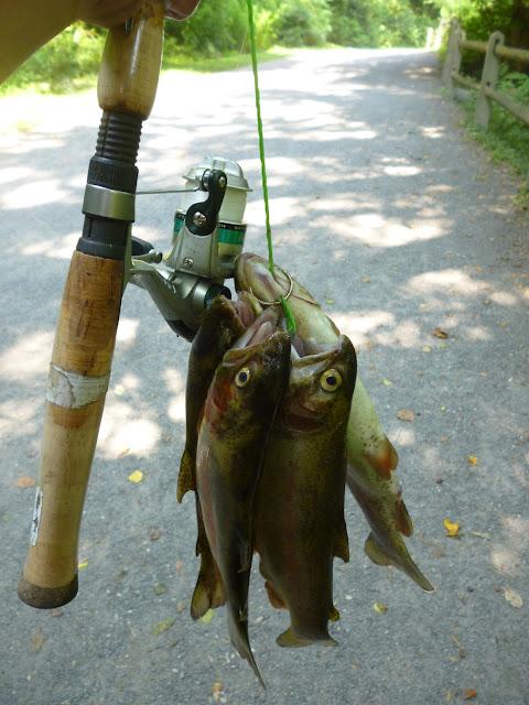 Extreme Philly Fishing Of Extreme Philly Fishing Recent Catches June 20th