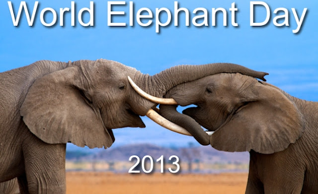 Happy World Elephant Day - August 12th, 2013