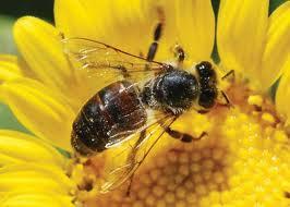 lebah dan bunga