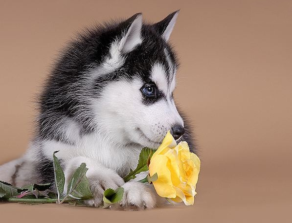 Most beautiful dog breed - photo#4